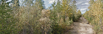 Near 5 Acres of Untamed Alaska Land