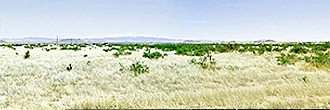 Spacious 1 Acre of Prime Desert Land