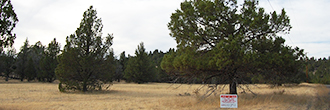 1.47 Acre Property Just North of Alturas