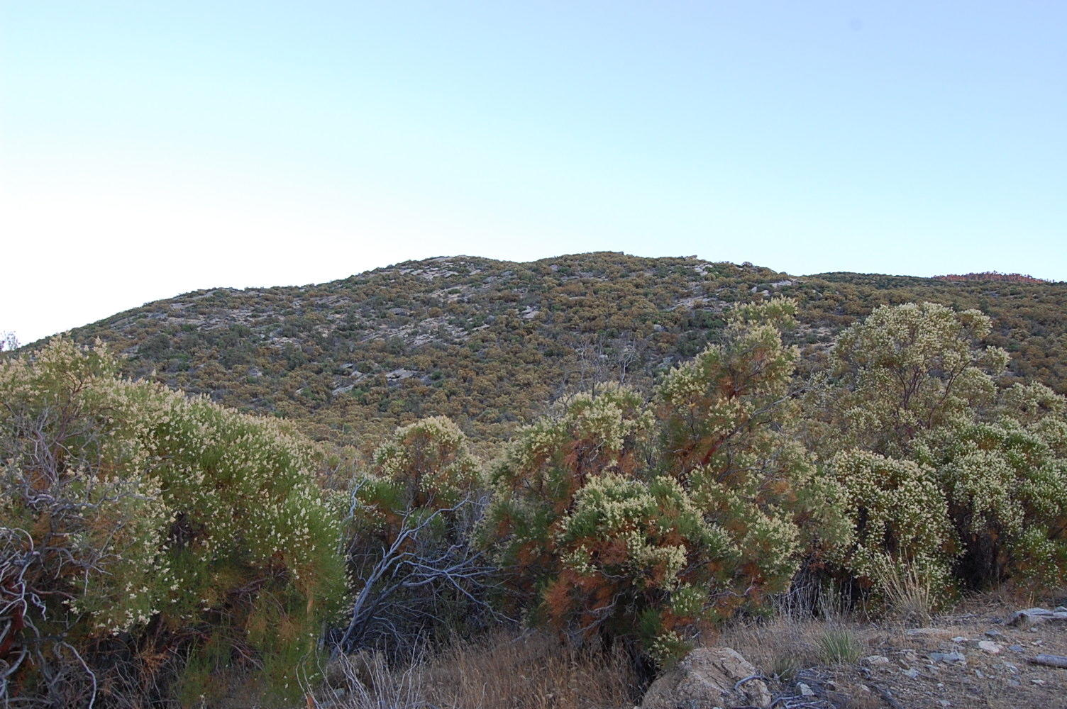 Magnificent 1 Acre Escape 45 minutes from Palm Springs - Image 2