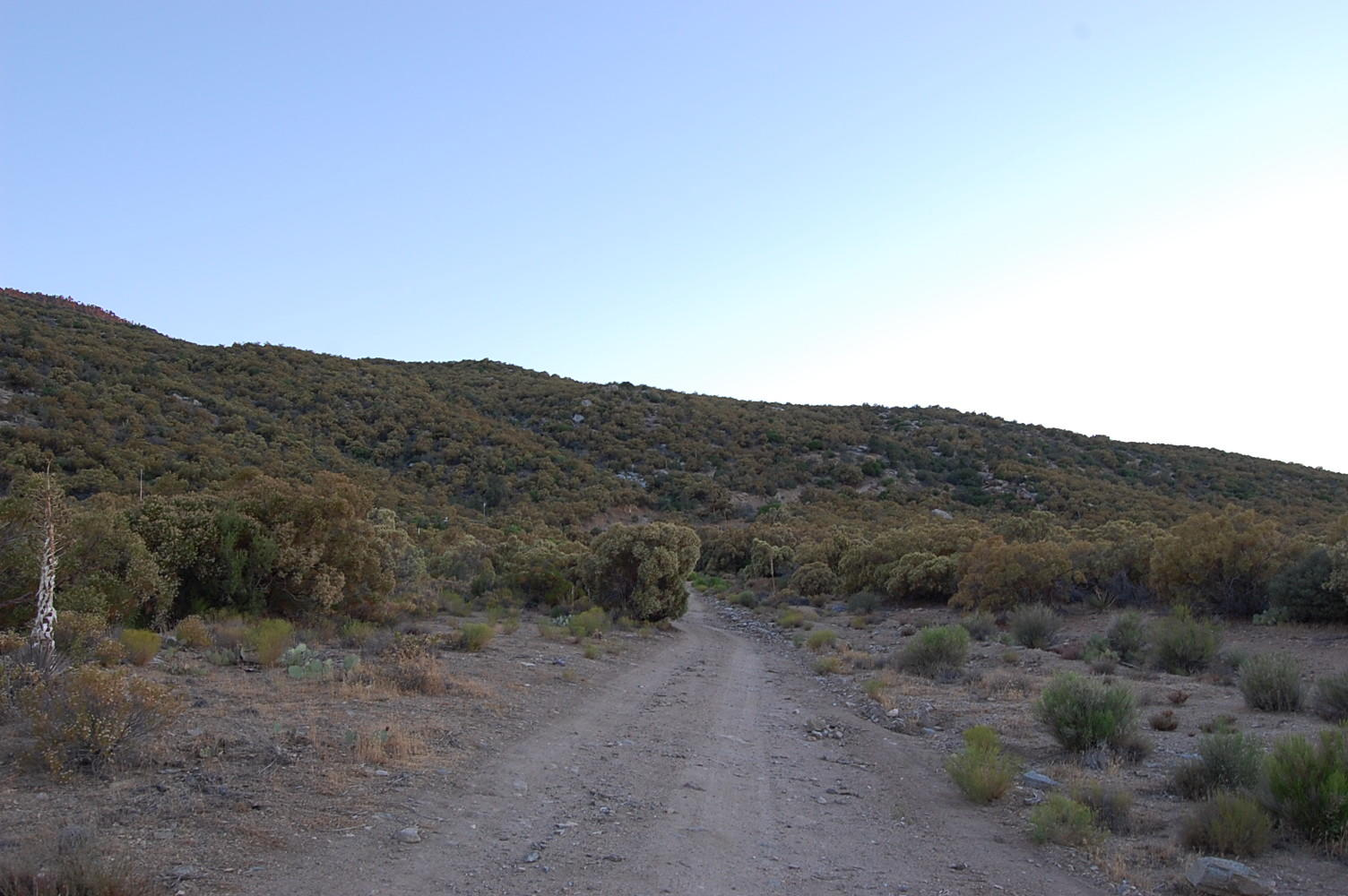 Magnificent 1 Acre Escape 45 minutes from Palm Springs - Image 3