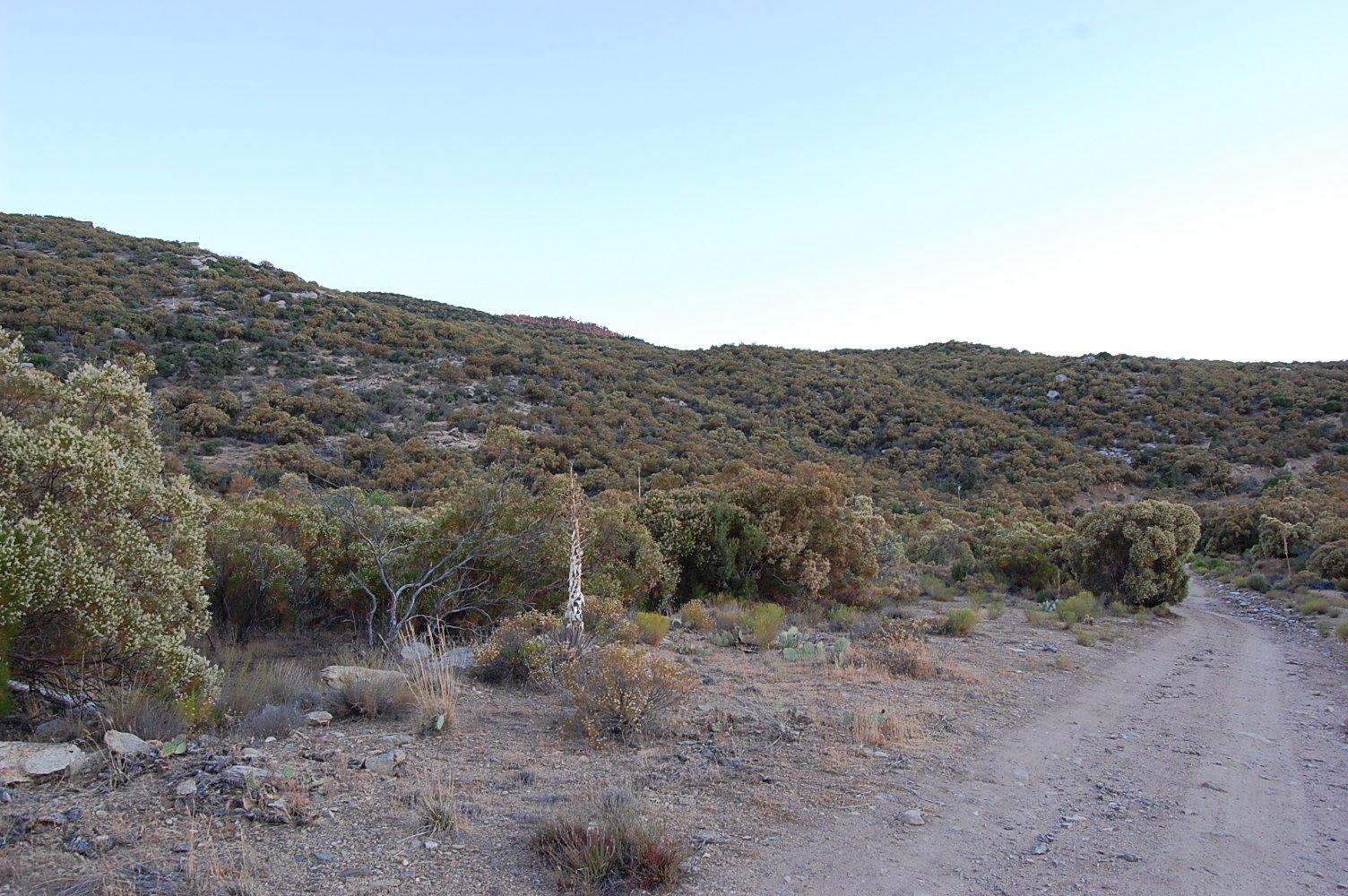 Magnificent 1 Acre Escape 45 minutes from Palm Springs - Image 0