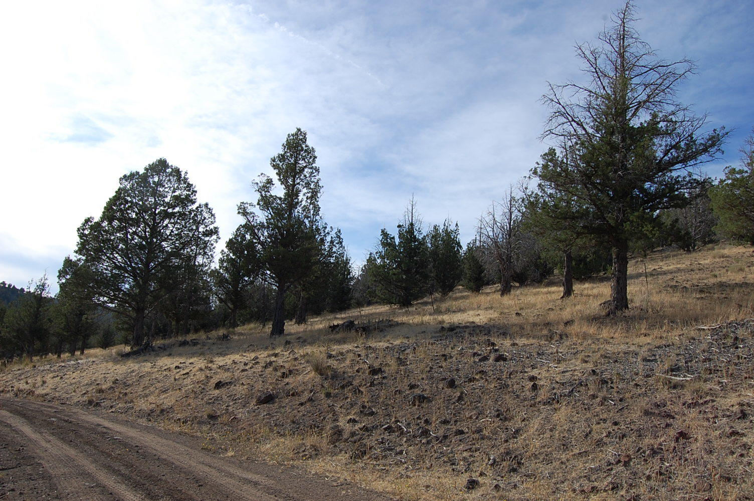 Acreage About 6 Miles North of Alturas - Image 5