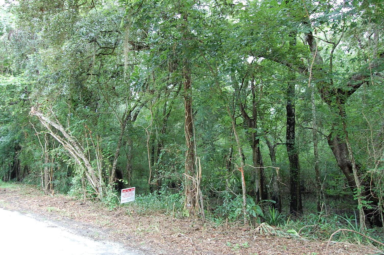 Gorgeous 2 Acres Near Florida Coast - Image 2
