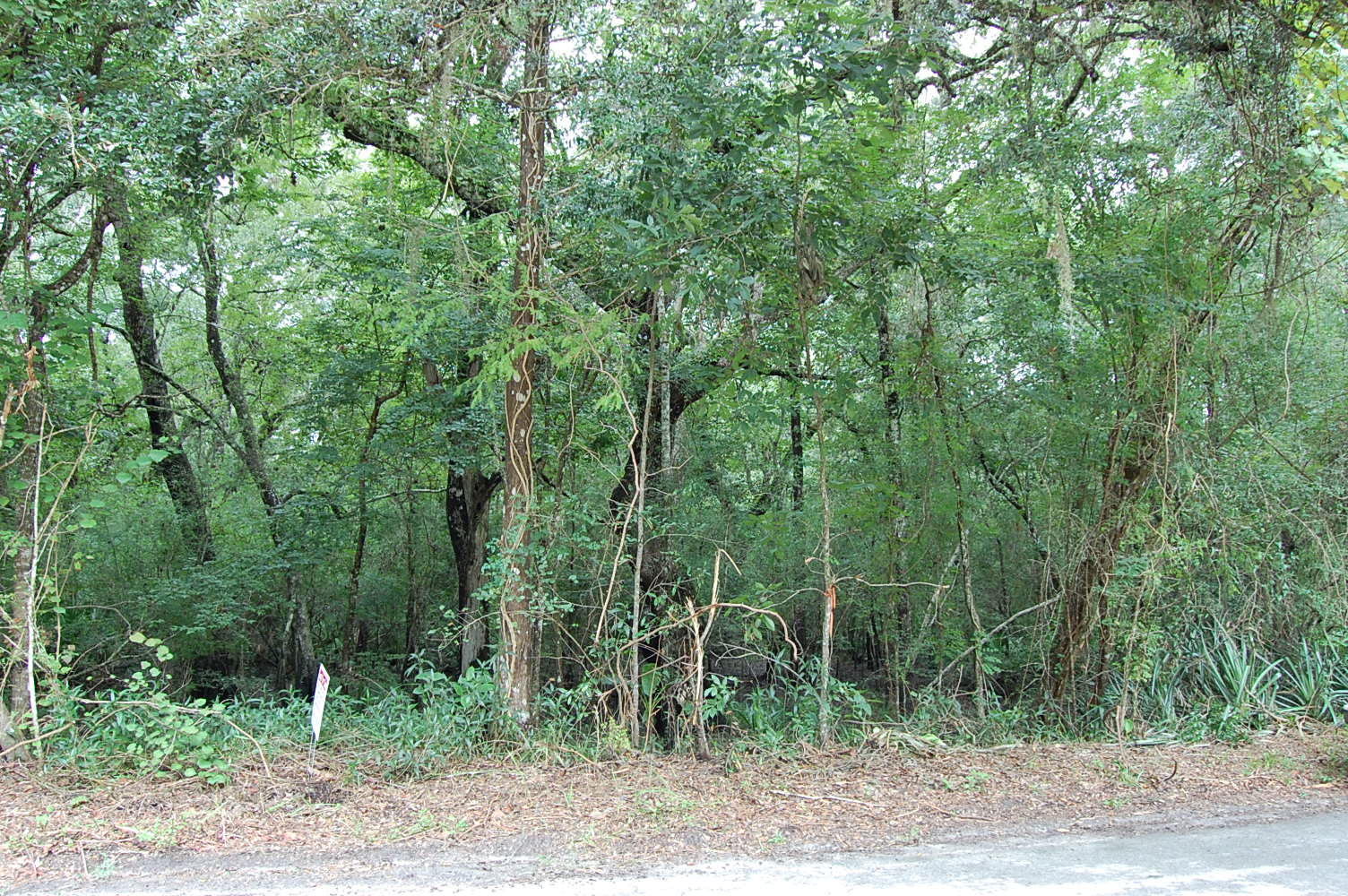 Gorgeous 2 Acres Near Florida Coast - Image 0