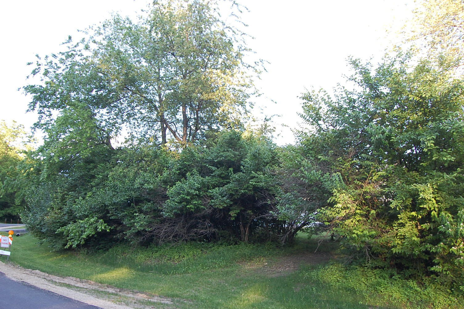 Beautiful Lot Near Candlewick Lake - Image 2