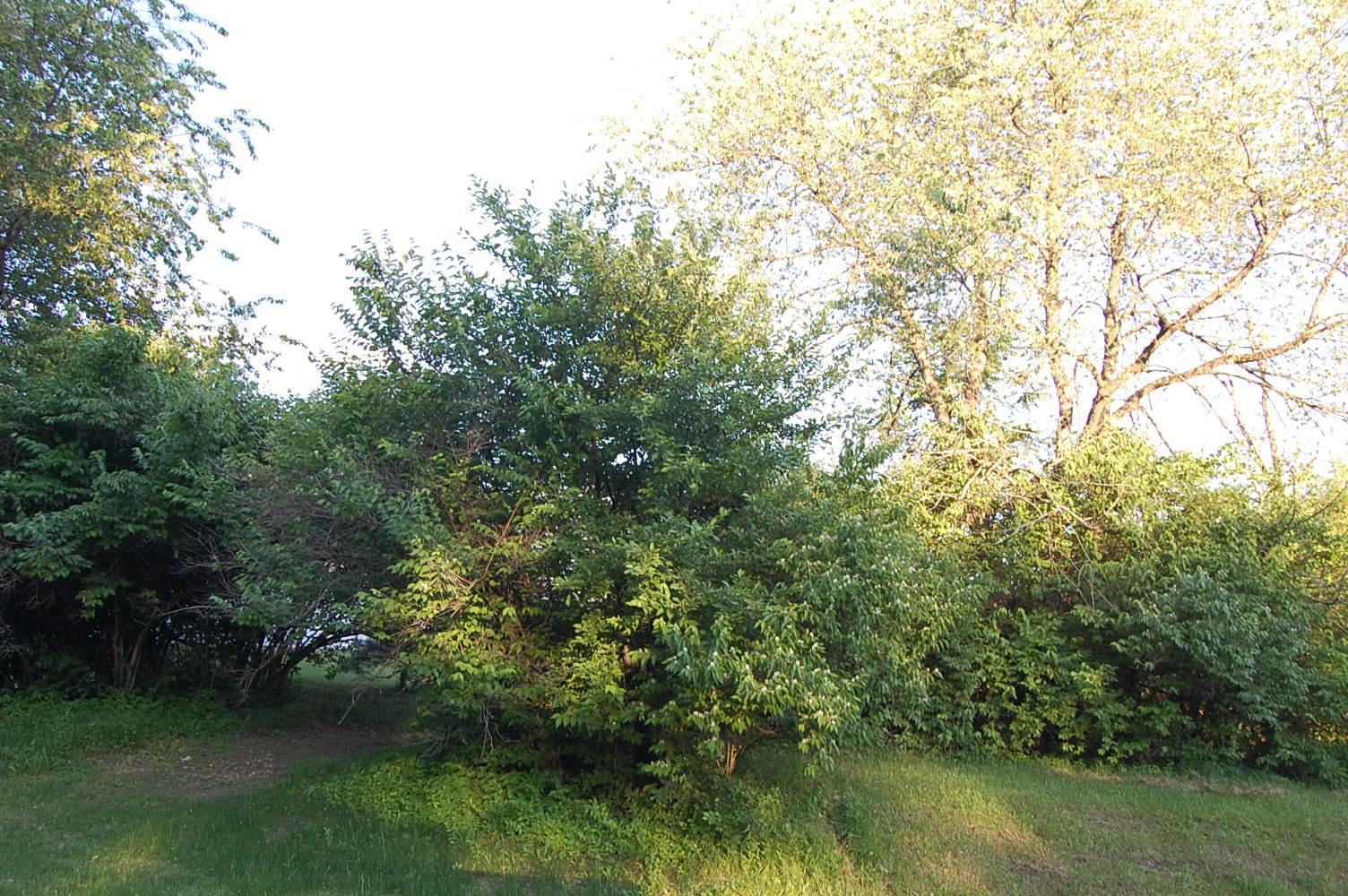 Beautiful Lot Near Candlewick Lake - Image 1