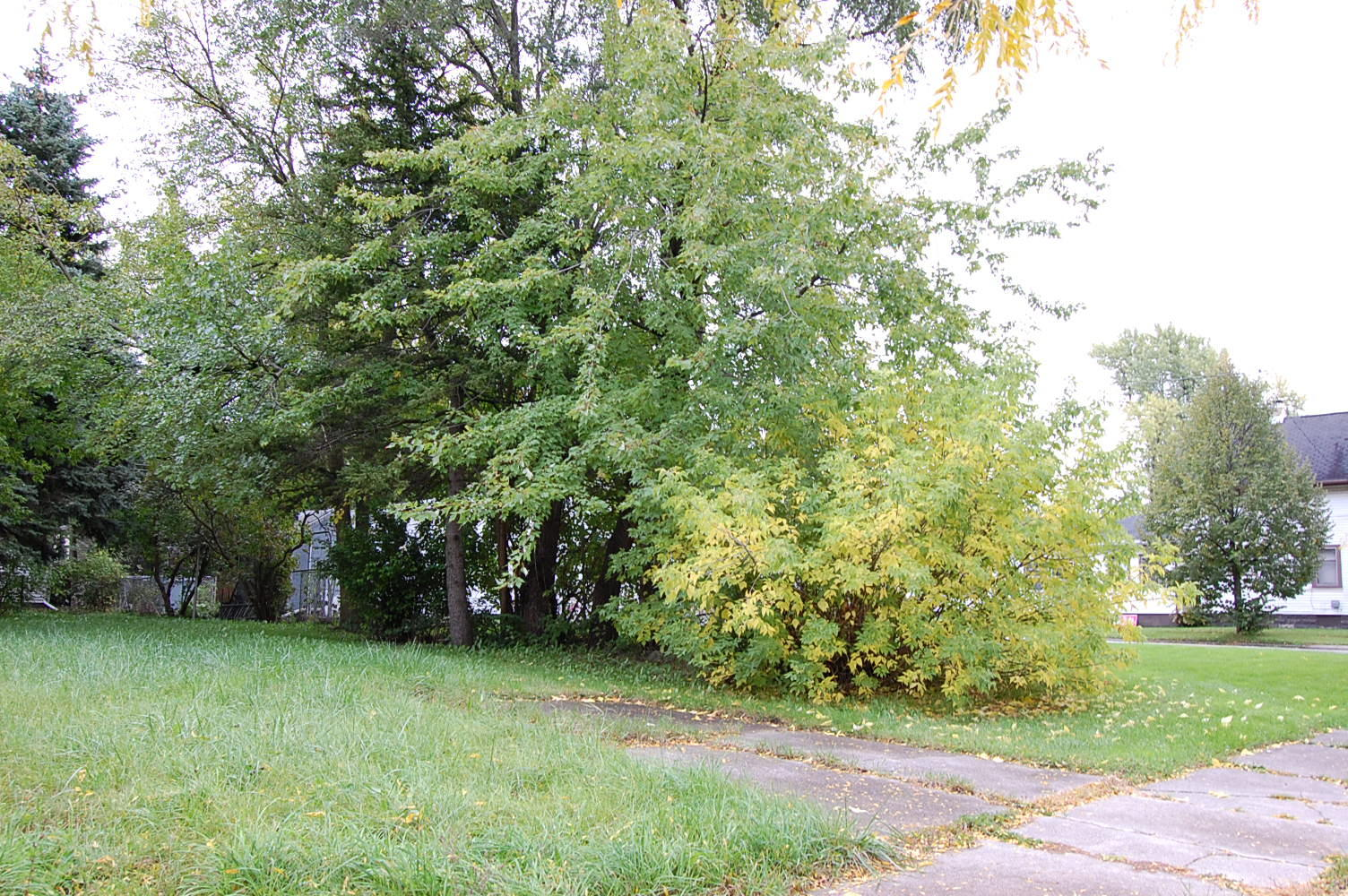 Charming Lot in Family Friendly Community - Image 2