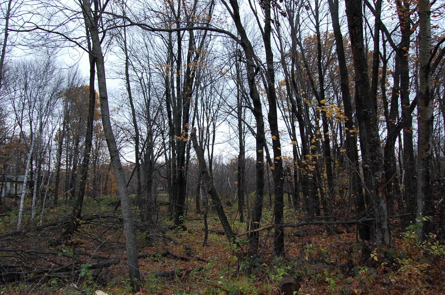 Minnesota property near golf course and lake - Image 3