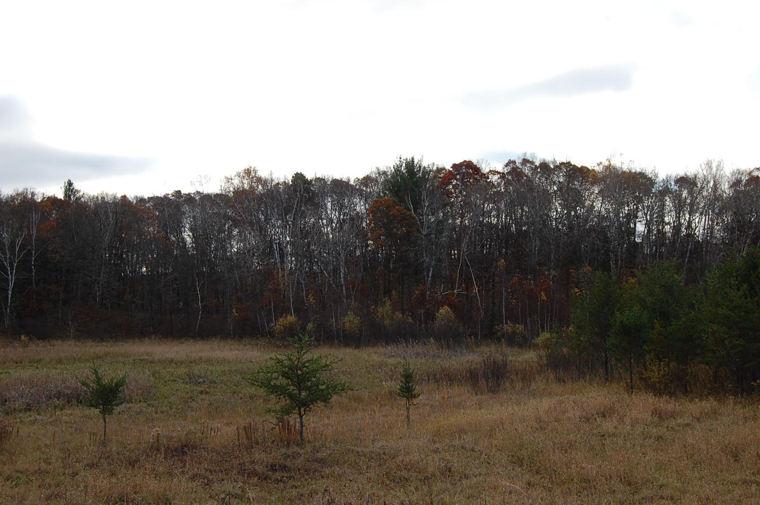 Just Over Two Acres in The Great North - Image 2