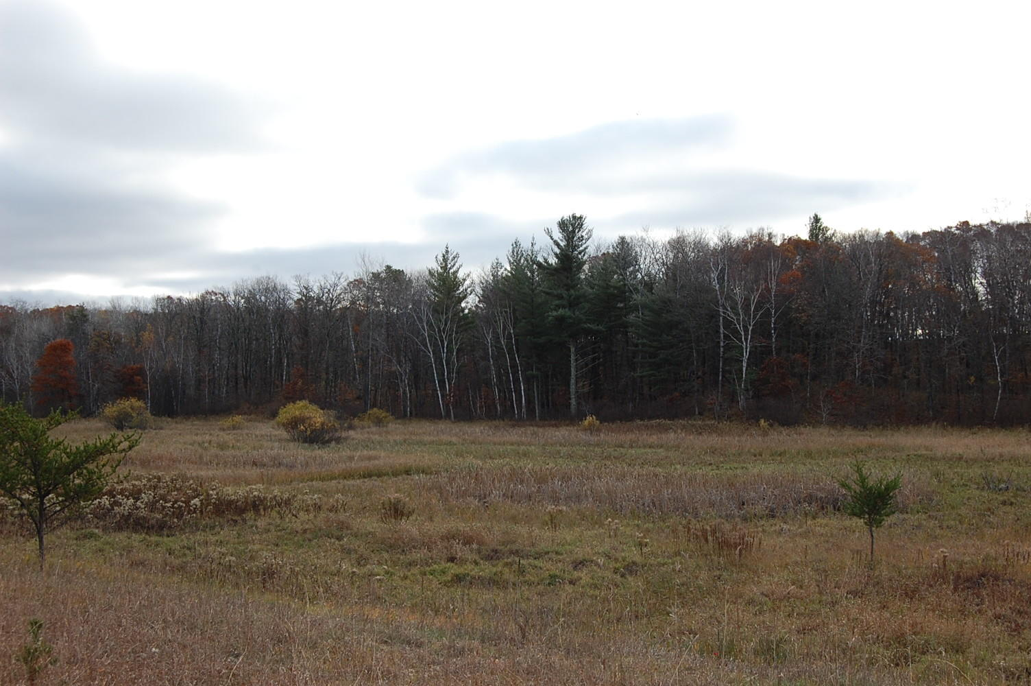 Just Over Two Acres in The Great North - Image 0