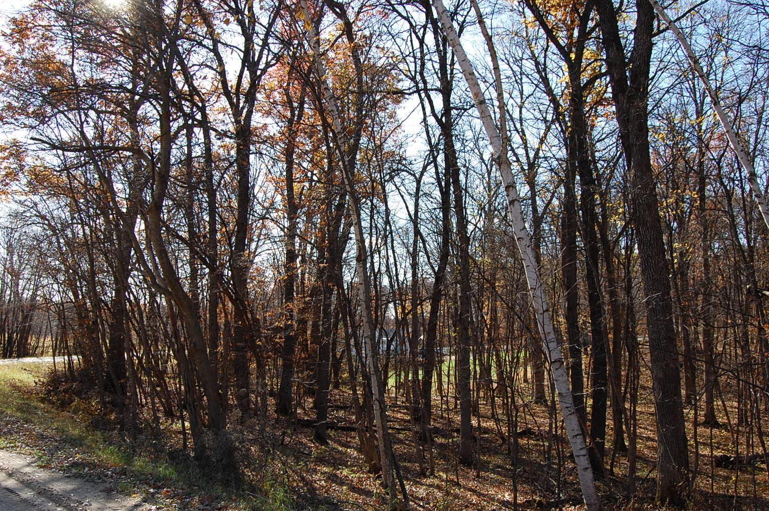 Fawn Lake Nearly Half Acre Property - Image 3