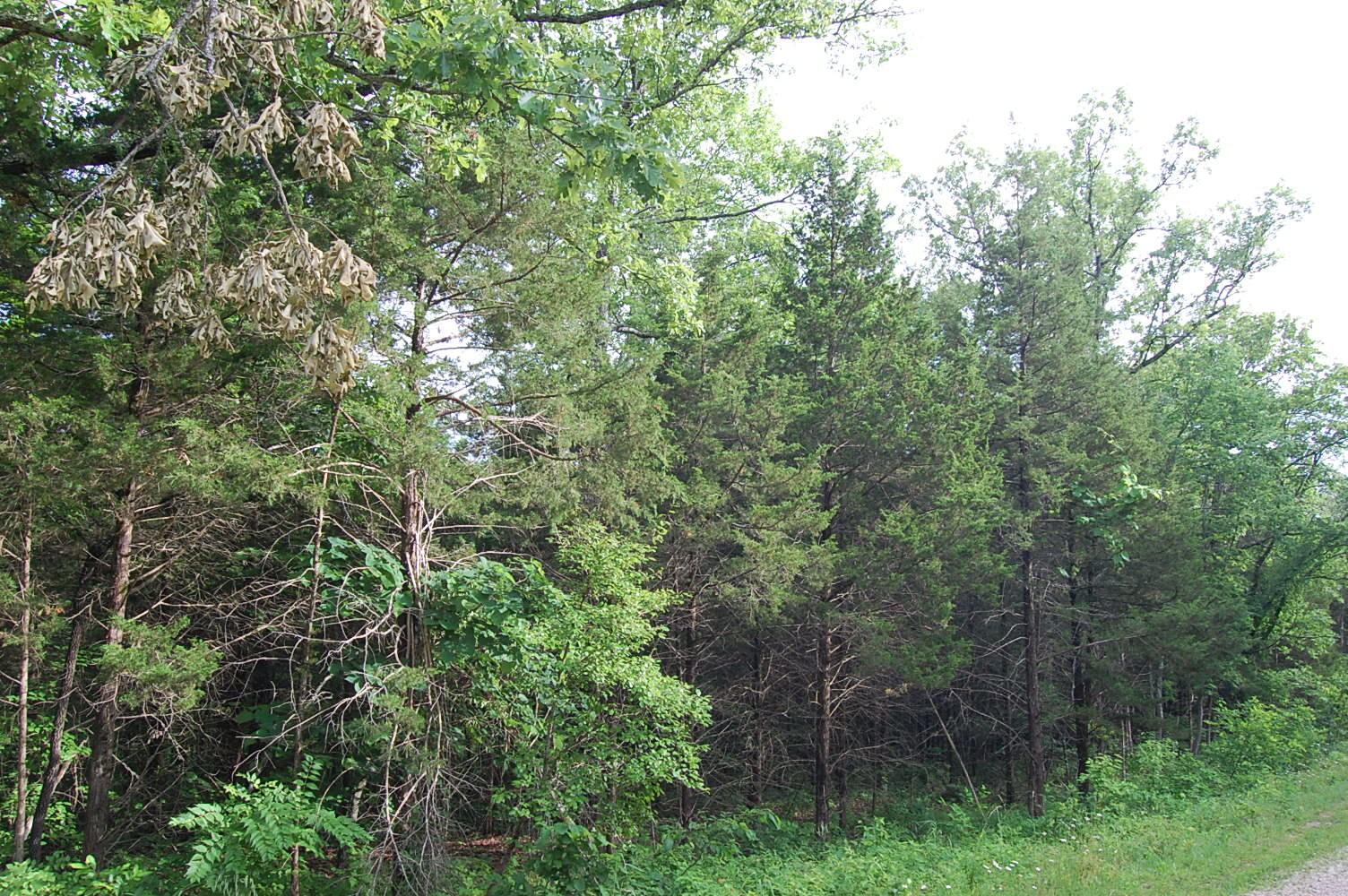 Beautiful 1/3 Acre Near Several Lakes - Image 0