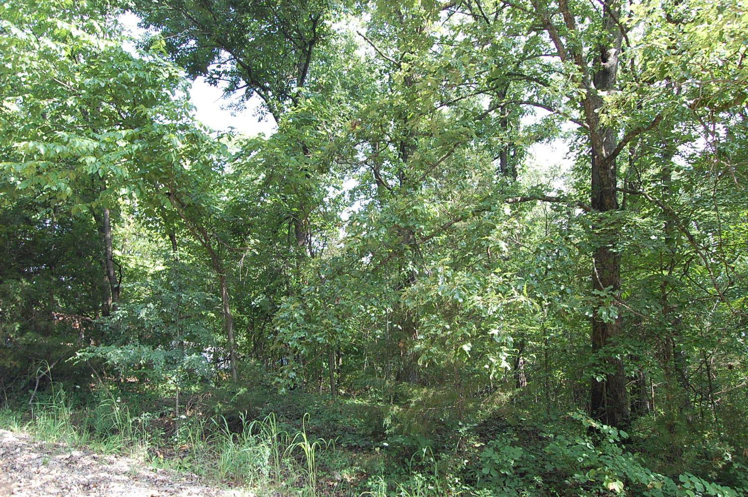 Country Gem Near Lake Toneycomo - Image 0