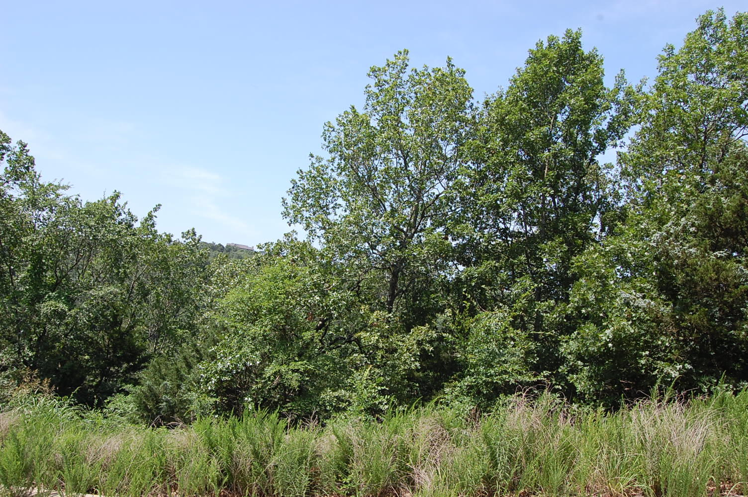 Stunning Land Opportunity Near Table Rock Lake - Image 1