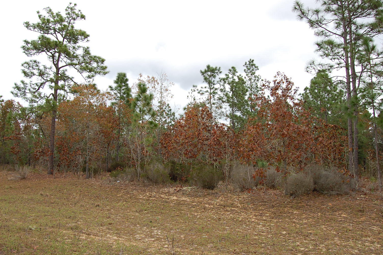 Over One Acre Waterfront Homesite - Image 4