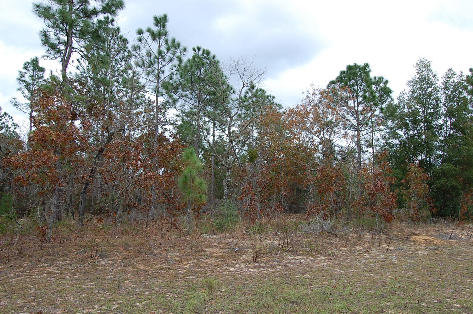Over One Acre Waterfront Homesite - Image 1