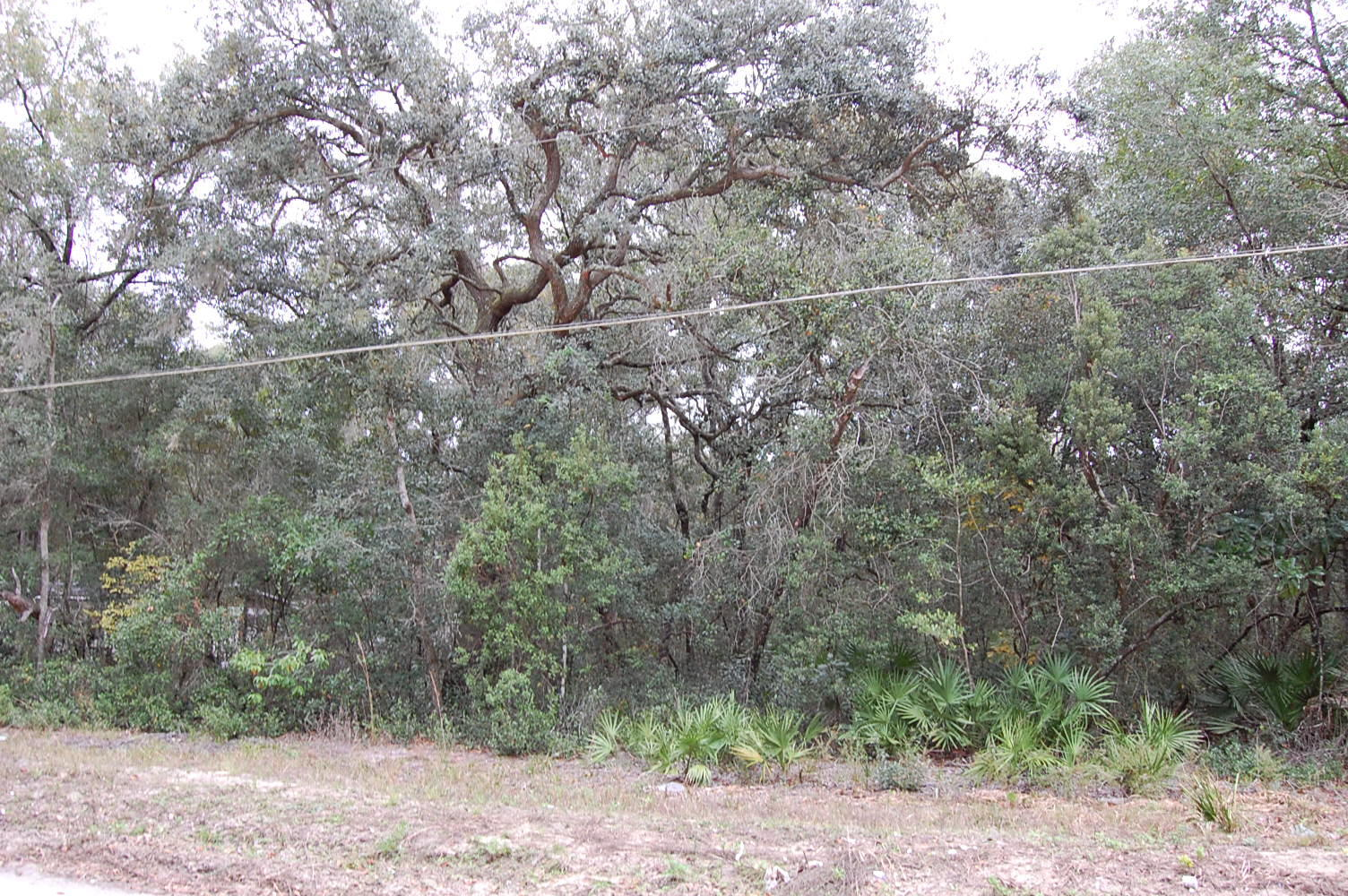 Acreage in Florahome Florida - Image 0