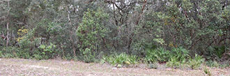 Acreage in Florahome Florida