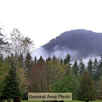 Tree-Covered Washington Paradise Near Cascade River - Image 1