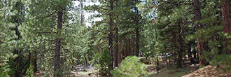 Double Wooded California Pines Lot