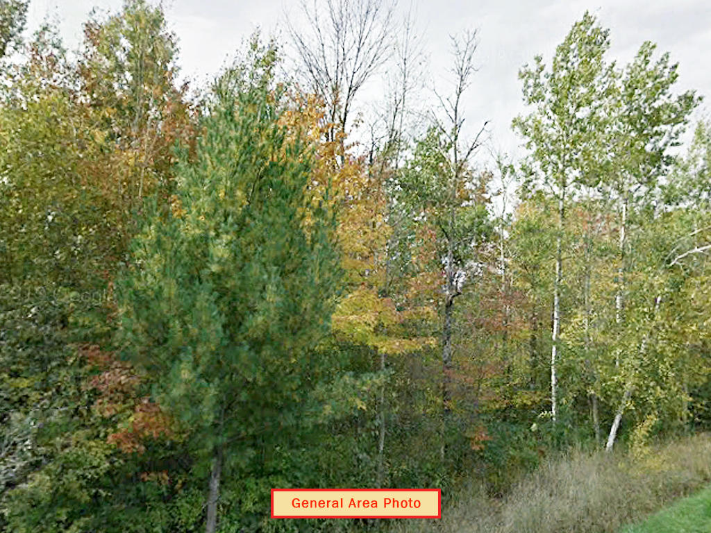 Heavily Treed Property in Beaverton - Image 4