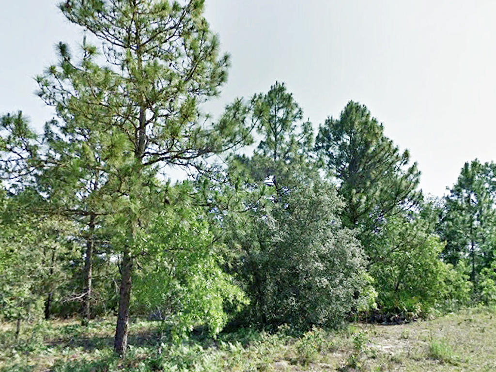 Nearly Quarter Acre Citrus Springs Tract - Image 4