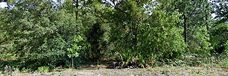 Nearly Quarter Acre Citrus Springs Tract