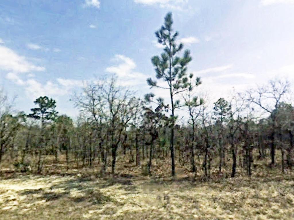 Residential Land on Florida West Coast - Image 0