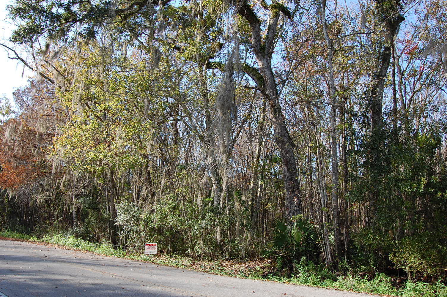 3 Acres in Sunshine State Steps From the Riverbank - Image 1