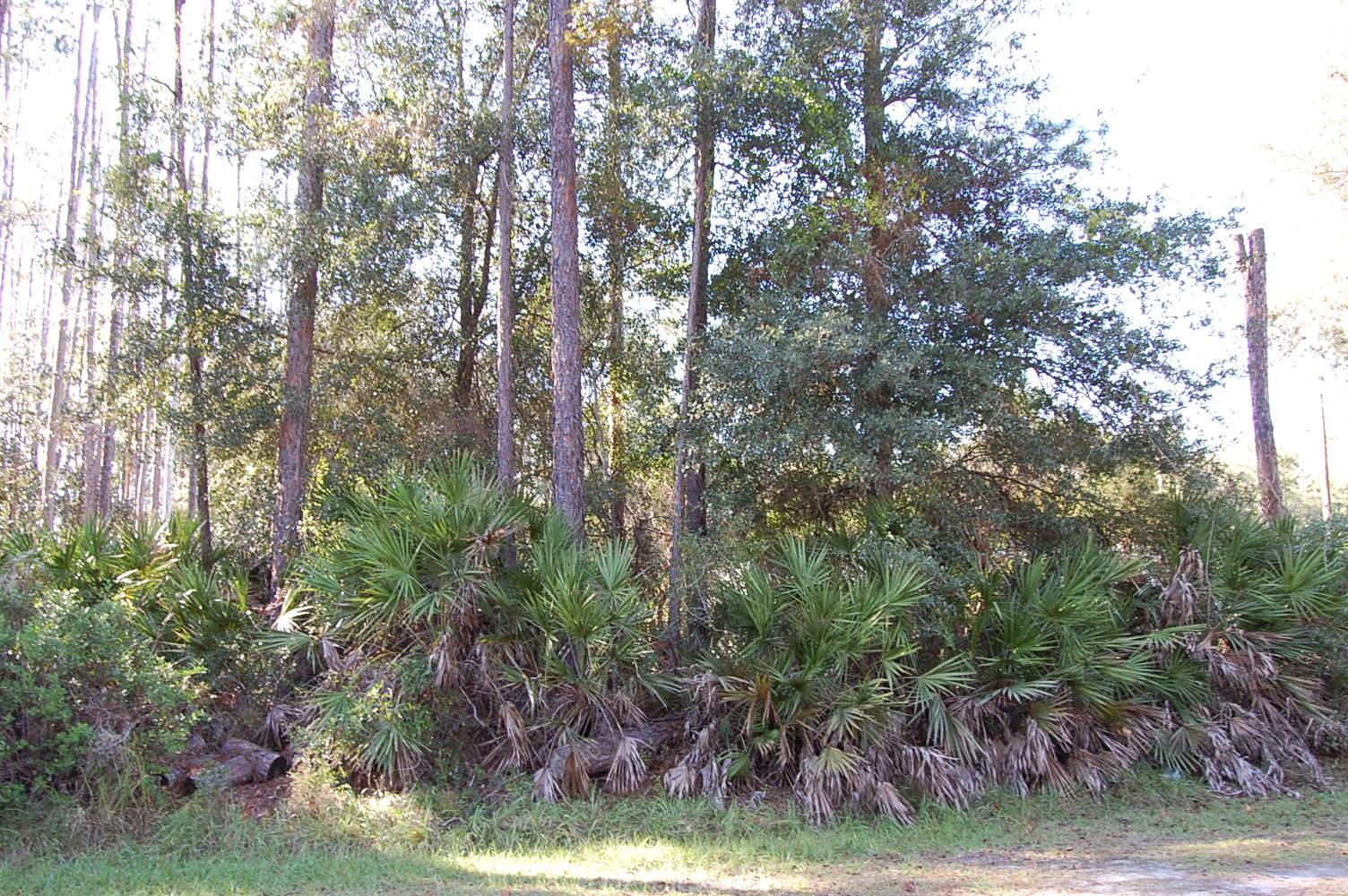 Over 1 Acre Near Many Lakes - Image 5