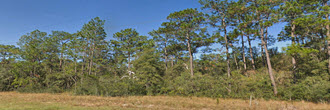 Nearly Quarter Acre Lot In Interlachen