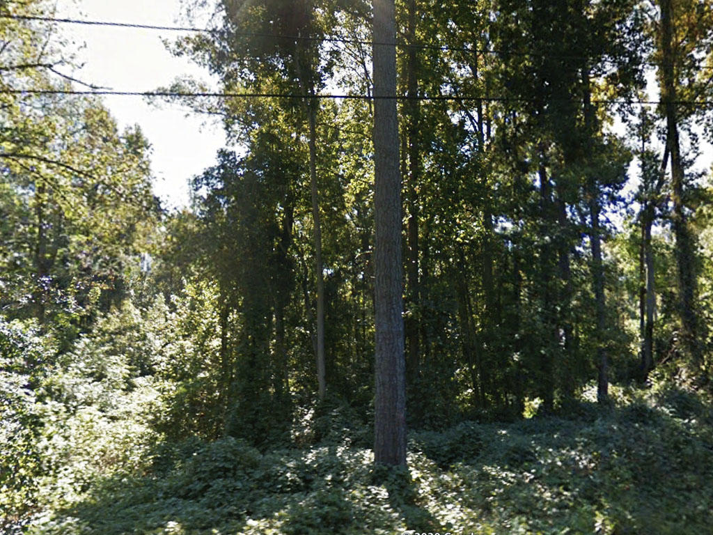 Over a Quarter Acre in South Carolinas Capital City - Image 3
