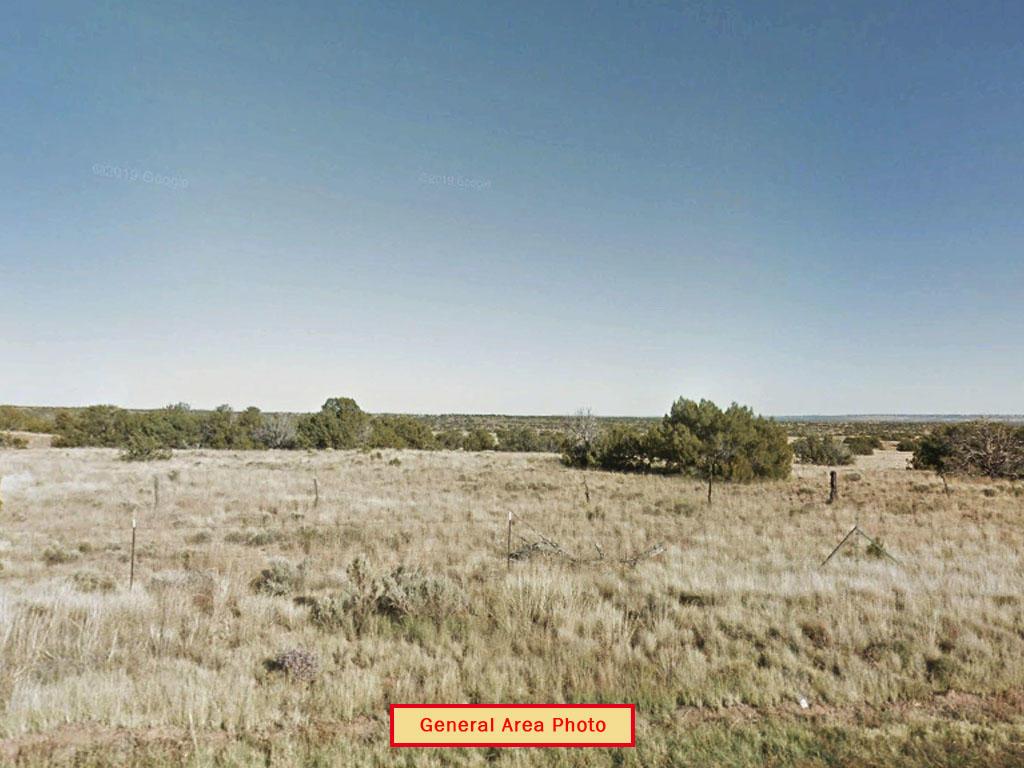 Off Grid Living in the Arizona Desert - Image 4