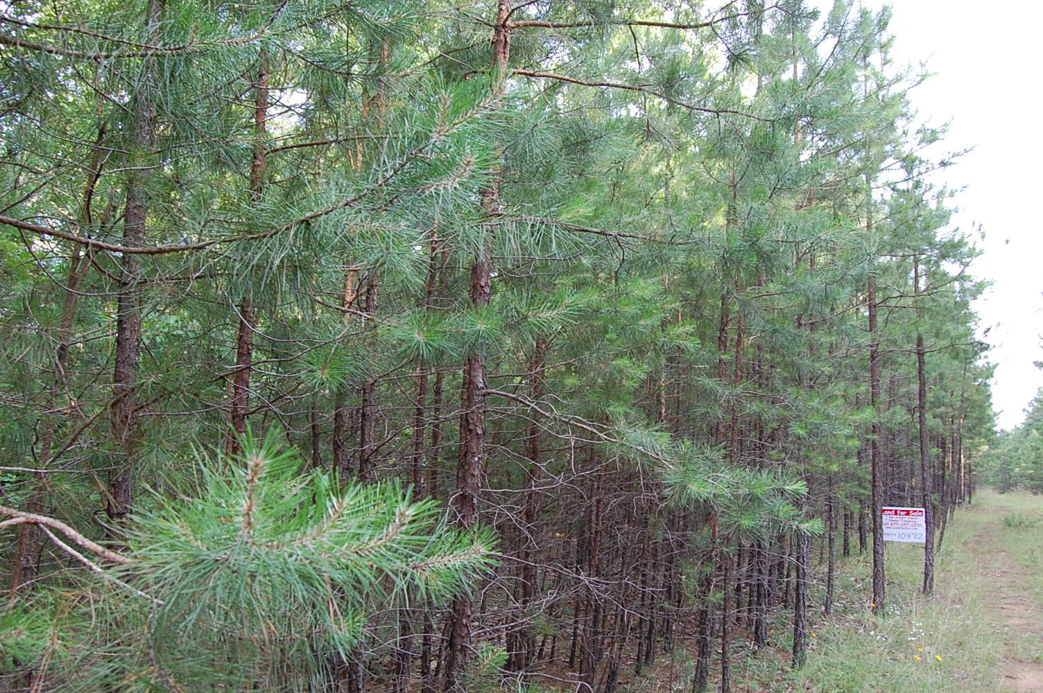 Residential Lot North of Greers Ferry Lake - Image 0