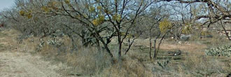 Pair of Central Texas City Lots