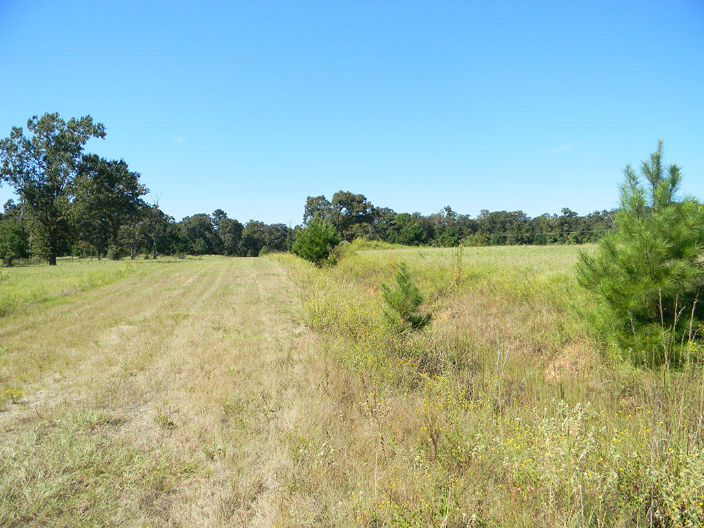 Half Acre Texas Lot in Trinity Plantation - Image 1