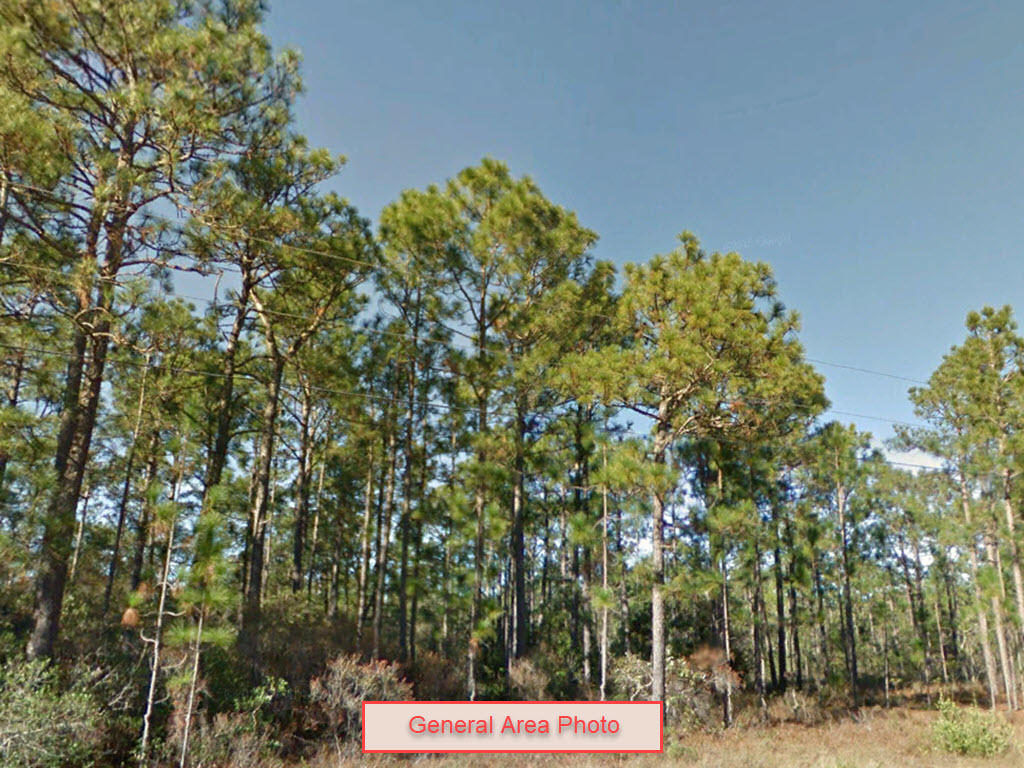 Wooded Property About 12 Miles to North Carolina's South Shore - Image 0