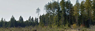 Find a forest of fun in the Olympic Peninsula