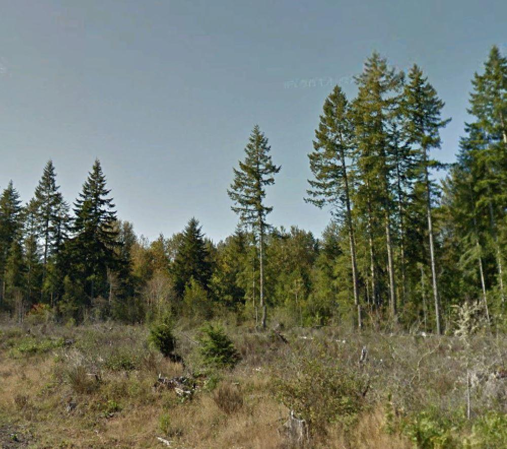 Find a forest of fun in the Olympic Peninsula - Image 4