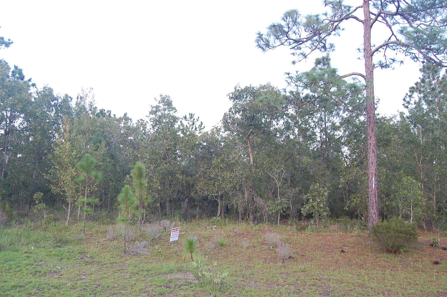 Nearly 1.50 Acre Interlachen Waterfront Property - Image 4