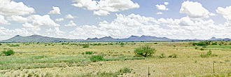 Beautifully Rare Half Acre in Desert Paradise