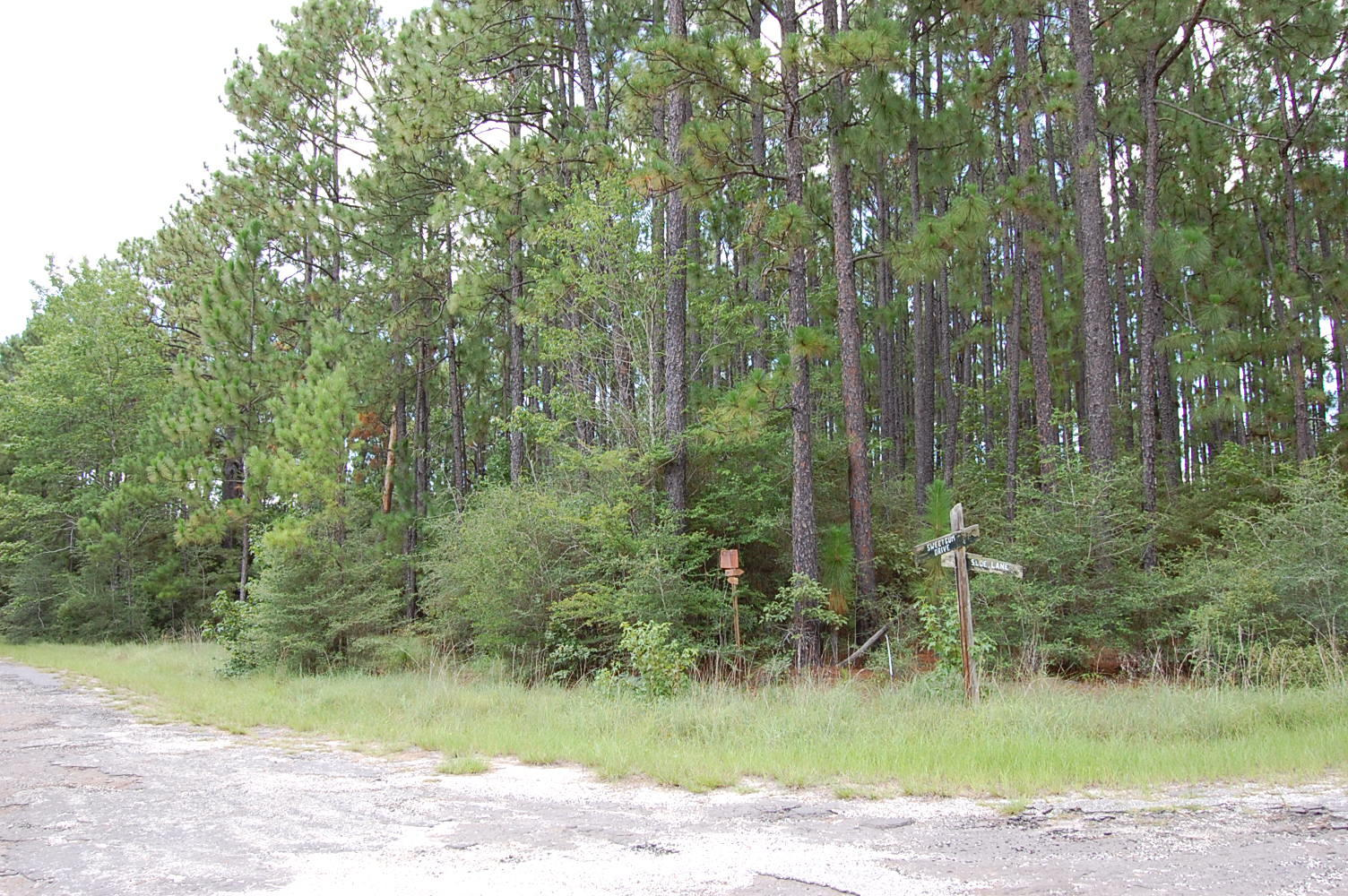 Wooded Eastern Texas Property - Image 1