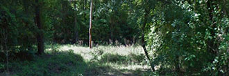 Secluded 2 Acre Lot Surrounded by Nature