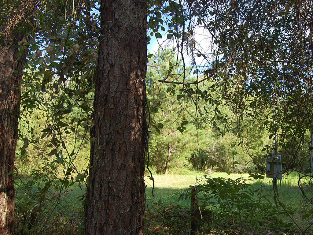 Over an Acre Near Lake City Florida - Image 3