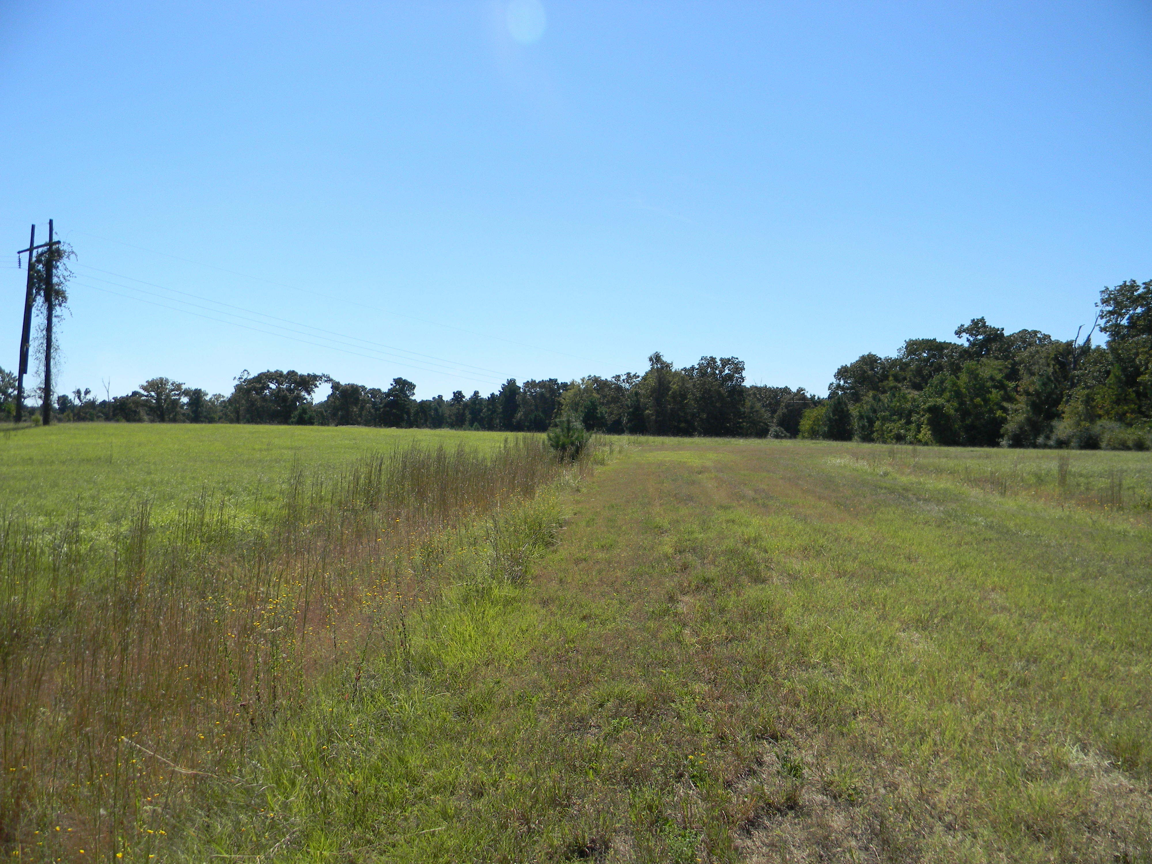 Perfect Acre for Living in the Texas Countryside - Image 1