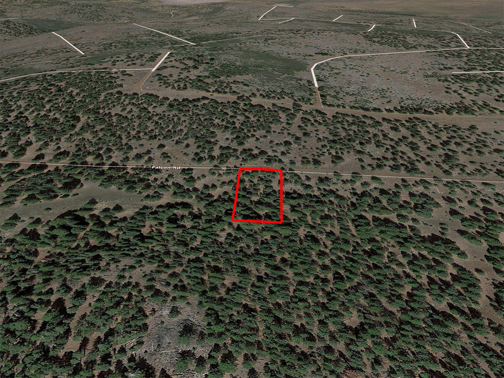 Nearly an acre in California Pines - Image 3