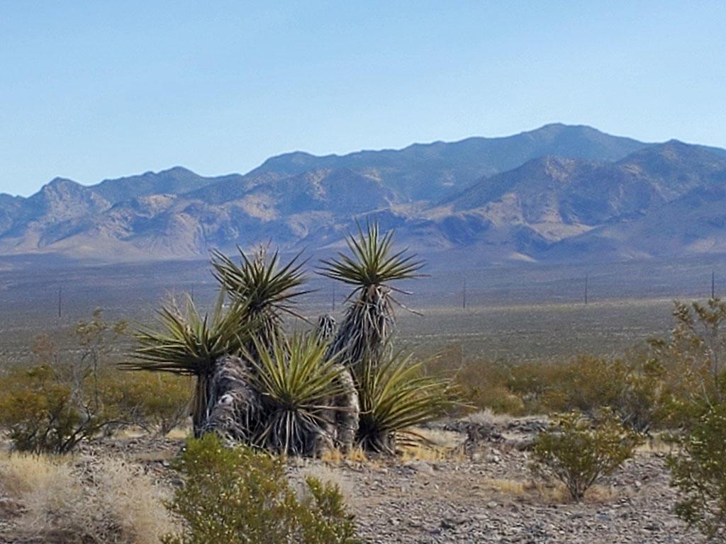 Half Acre in Vibrant Desert Town - Image 0