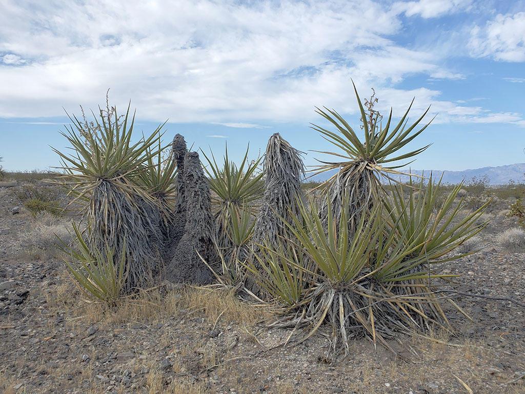 Beautiful Half Acre Desert Gem - Image 5