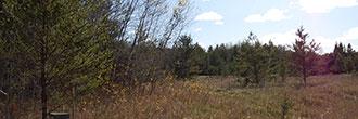 Timber Ridge Cleared Property